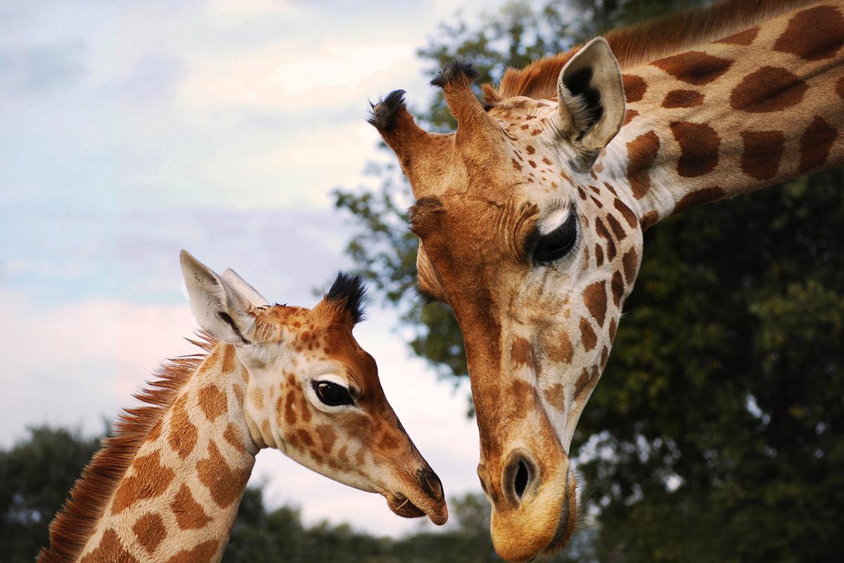 Parc zoologique au cœur de la Provence - Zoo Barben