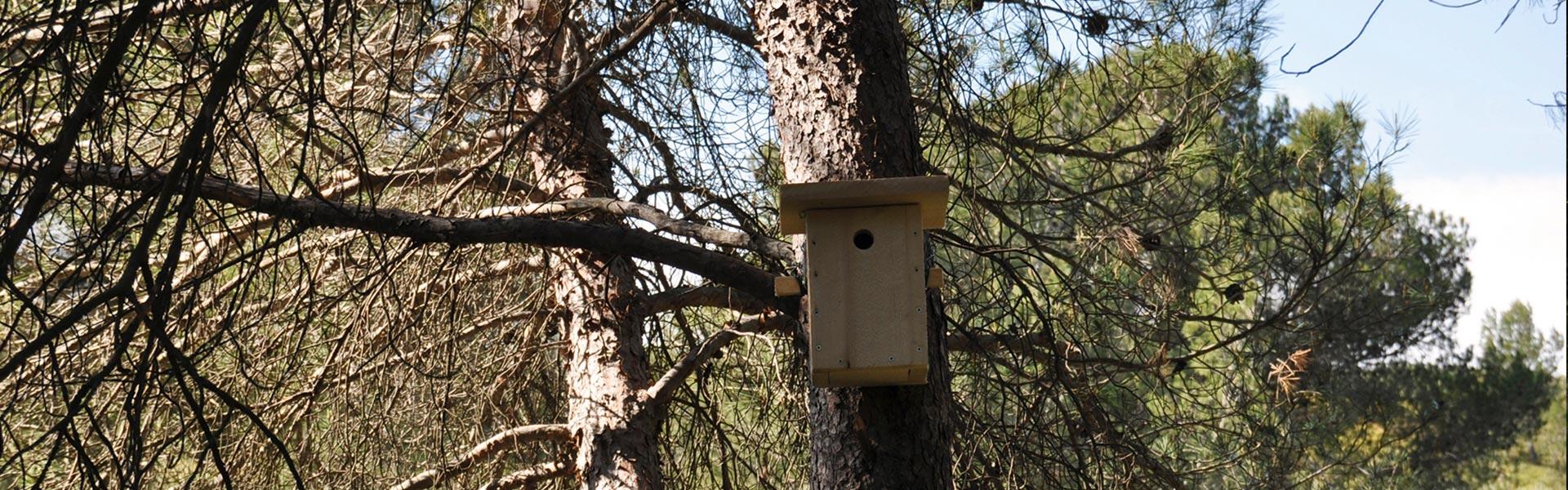 headbandeau-environnement-niche-arbre