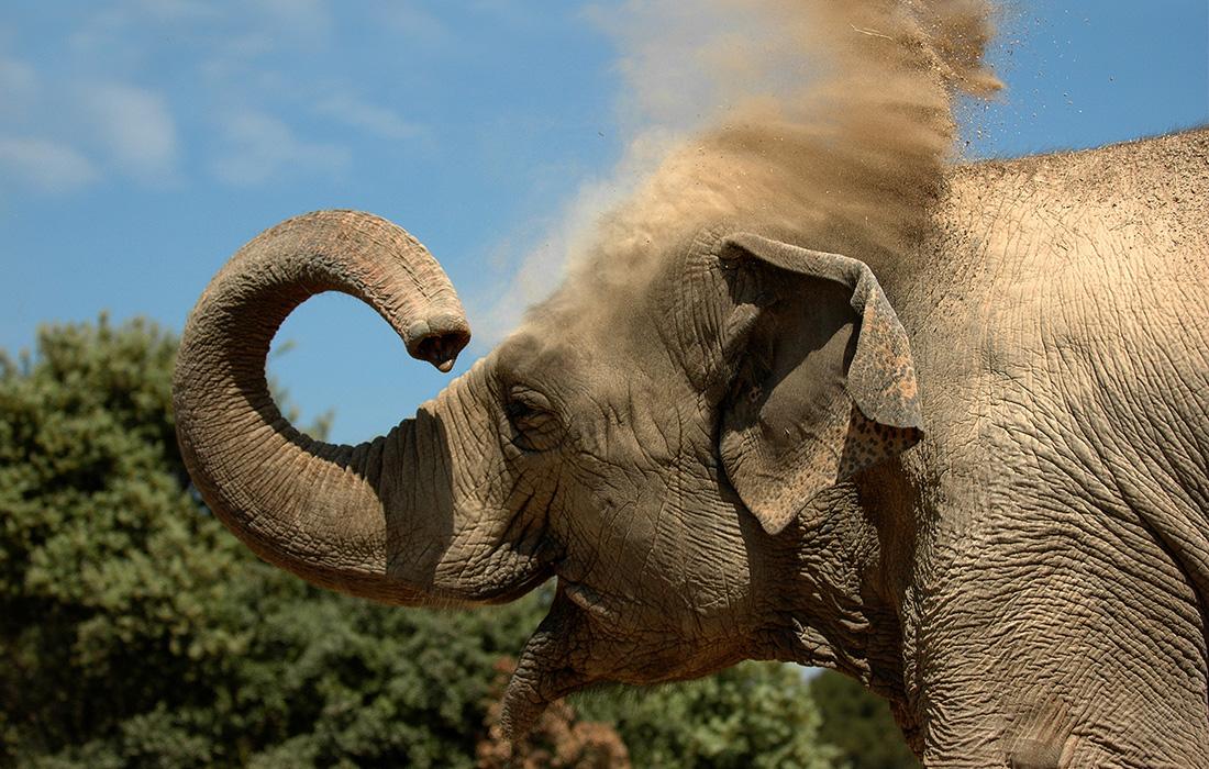 elephant_actualits_journee