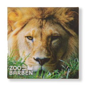 MAGNET LION ZOO